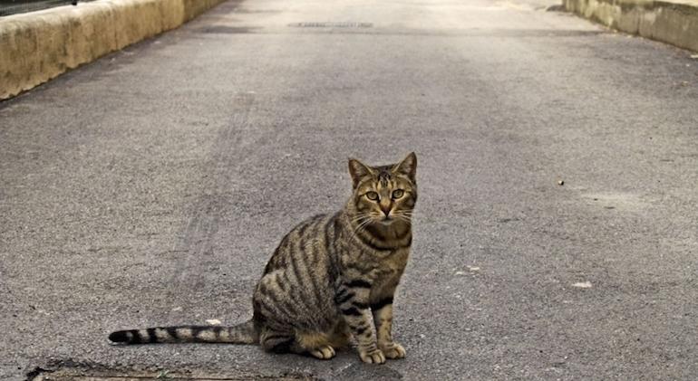 Наезд на кошку1
