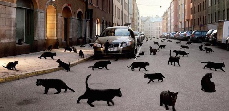 Наезд на кошку2