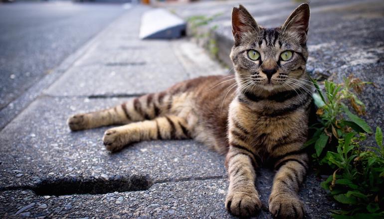 Наезд на кошку3