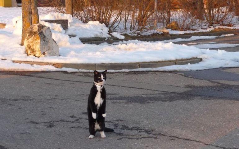 Наезд на кошку4