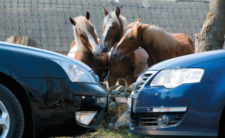 Одна лошадиная сила3